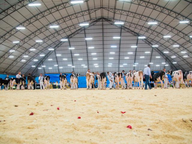 Expojovem Castrolanda 2020 mostra qualidade nos animais Jersey e Holandês da região de Castro-PR.